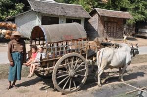 The ox carriage taxi in Burma