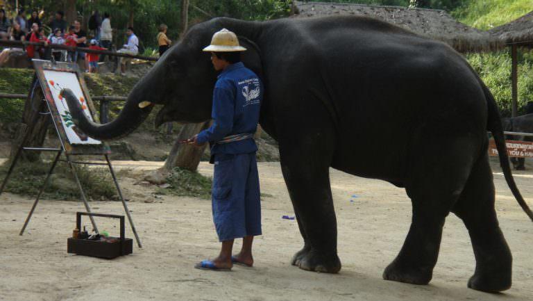 ElephantLand in Chiang Mai, Thailand
