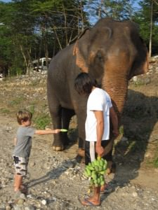 feeding the elephants in Chiang mai Thailand