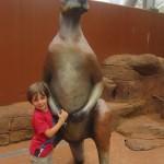 boy and a kangaroo
