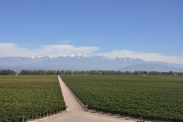 Wine tasting in Mendoza, Argentina. Children not permitted.