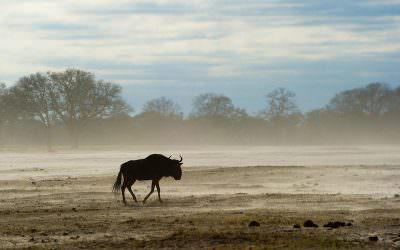 Zimbabwe's back on the travel map
