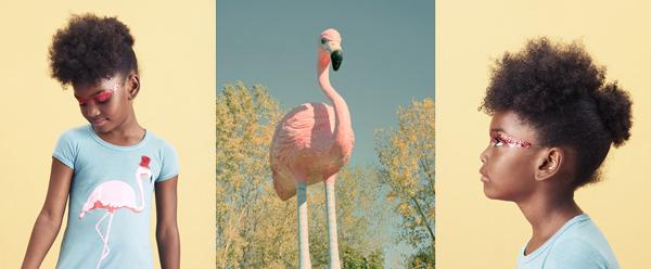 Flamingos. Where are you?