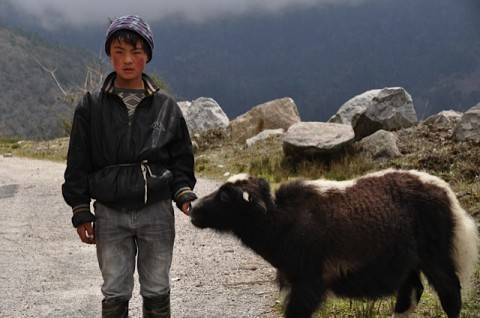 A young yak herder