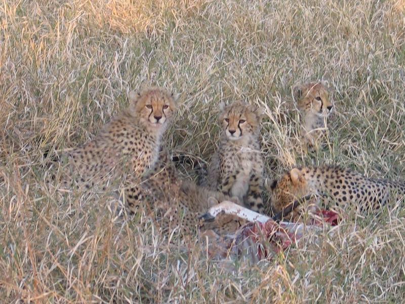 Serengeti Tanzania stillness