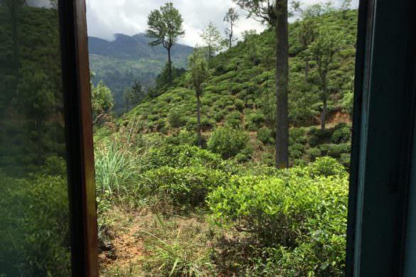 I'll never have a cup of tea the same way again - Sri Lanka  3 
