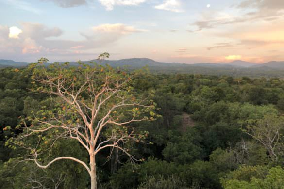 wide forest in Malawi