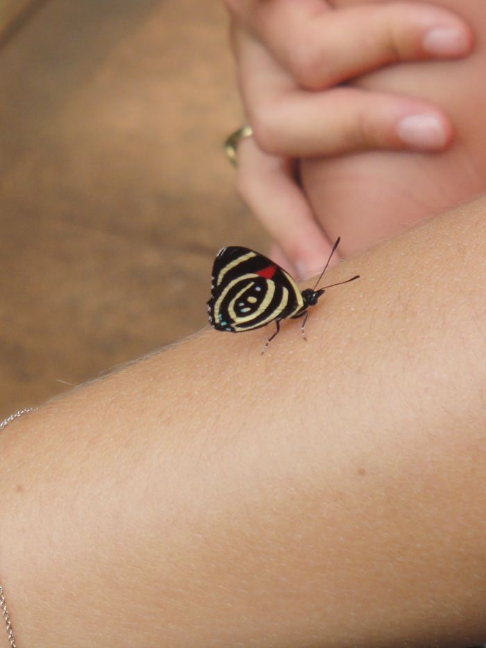 little butterfly landing on an arm