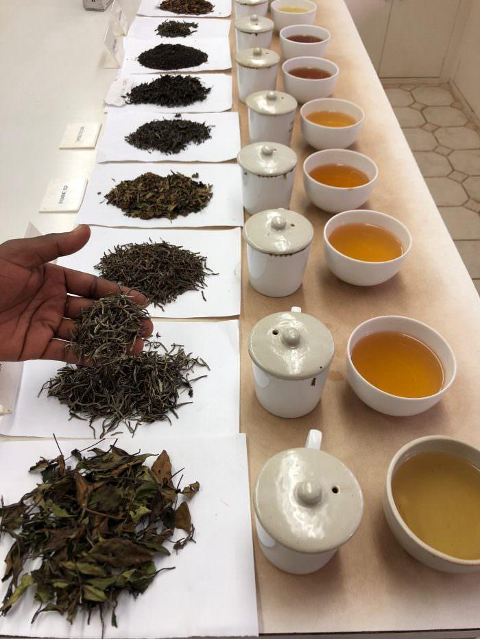 Tea tasting, tea, Malawi, Africa