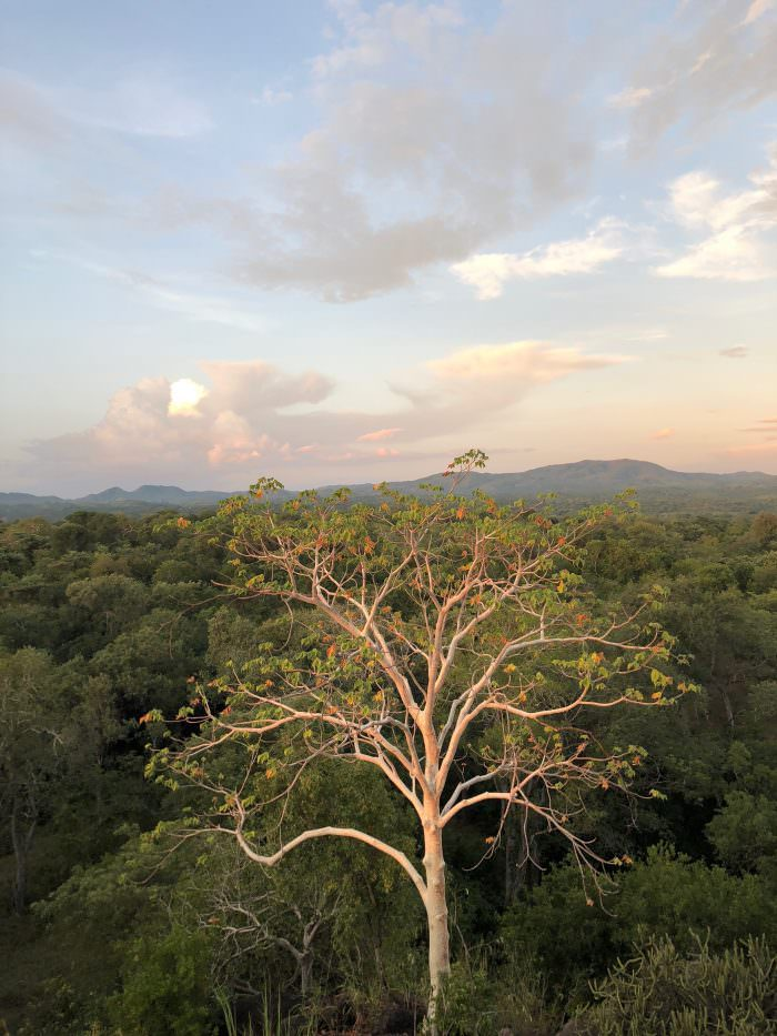 Views in Majete Park, trees, mountains