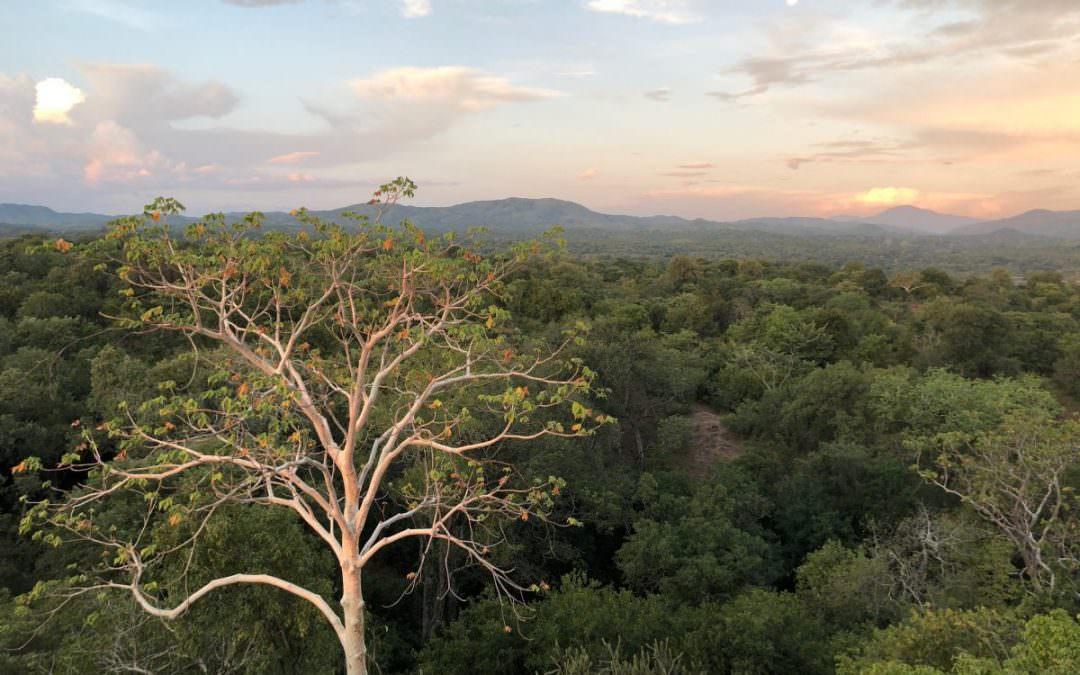 Malawi: a feel good story in Majete Park [2/4]