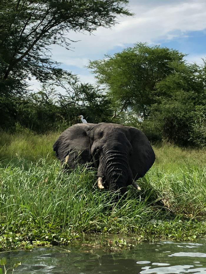elephant, Majete Park, Malawi, Africa