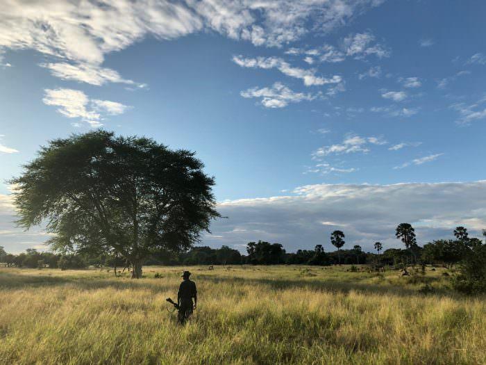 Vista in Liwonde Park, Malawi, Africa